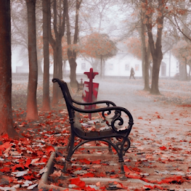 the last days of autumn by Sanja Dedić - City,  Street & Park  City Parks ( park scene, park, autumn, park bench,  )