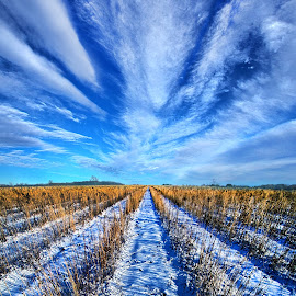 Line of Sight by Phil Koch - Landscapes Prairies, Meadows & Fields ( vertic  al, travel, yellow, love, nature, snow, weather, perspective, light, orange, trending, colors, art, twilight, ins  pired, mood, journey, horizon, portrait, country, can  on, environment, winter, dawn, season, serene, popular, outdoors, trees, lines, natural, hope, inspirational, wisconsin, ray, joy, beauty, landscape, sun, photography, s  ky, life, ice, emotions, dramatic, horizons, clouds, office, park, heaven, camera, beautiful, scenic, living, morning, shadows, field, unity, blue, sunset, amber, peace, meadow, beam, earth, sunrise )
