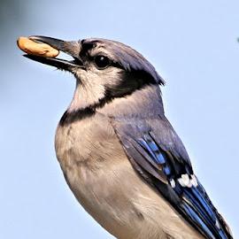 Saturdays Best 5 by Terry Saxby - Animals Birds ( bird, canada, terry, goderich, ontario, saxby, nancy )