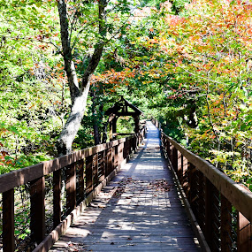 Boardwalk in Cheaha State Park, Alabama by Gwyn Goodrow - Landscapes Forests ( changing leaves, autumn, oak, cheaha state park, alabama, pine, boardwalk,  )