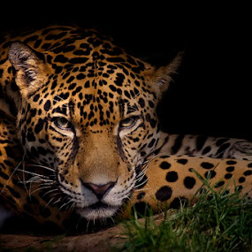 Peace by Cheri McEachin - Animals Other Mammals