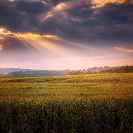 by Dragan Milovanovic - Landscapes Prairies, Meadows & Fields