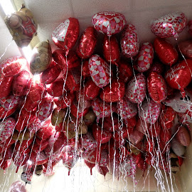 Valentine Balloons by Ann Rainey - Public Holidays Valentines Day ( holiday, hearts, red, pink, balloons, valentine,  )