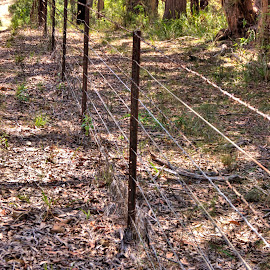 Barbed Wire Fence by Ella Kingston - Artistic Objects Other Objects ( boundary fence, fence, bush land, private property, australia, barbed wire, barbed wire fence, leaves, fence line )