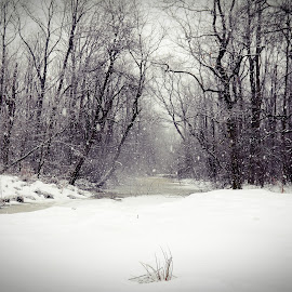 winter in the forest by Gabi Radoi - Landscapes Forests ( water, sky, winter, snow, trees, forest )