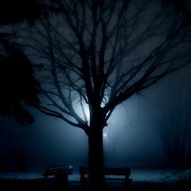 Winter night by Plamen Mirchev - Digital Art Places ( blue, night, nightscape, dark, tree, misty, park, night photography, fog,  )