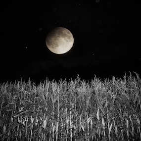blue moon by Serenity Deliz - Landscapes Starscapes ( moon, cornfield, nighttime, night )