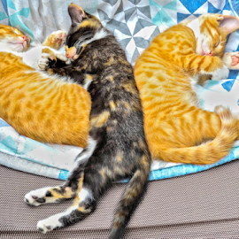In the middle by Stephen Fouche - Animals - Cats Kittens (  )