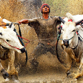 PACU JAWI, WEST SUMATERA, INDONESIA by Yenny Narny - Sports & Fitness Rodeo/Bull Riding
