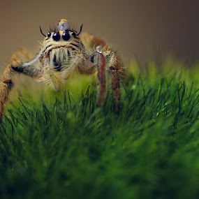 Mr. Spidey by Steven Silman - Animals Insects & Spiders