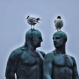 Two Men by Ashwini Attri - Buildings & Architecture Statues & Monuments ( sculpture, birds on heads., statue, art, frogner's park )