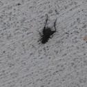 Fall Field Cricket
