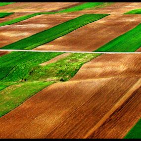 Green tracks by Mladjan Pajkic - Landscapes Prairies, Meadows & Fields