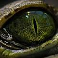 Download Full Jurassic Evolution 1.1.2 APK