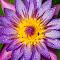 IMG_7568-Edit.jpg