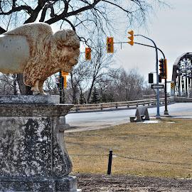 Bison by Sergey Timokhin - City,  Street & Park  Historic Districts ( bison, bridge, city )
