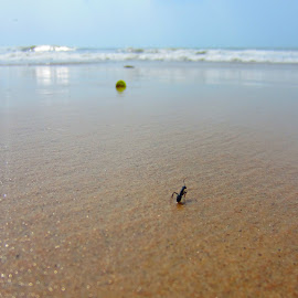 The lonely ant in a beach.  by Krishna Kumar - Landscapes Beaches