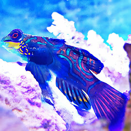 It's a Colorful Life by Keith Allen Zundel - Animals Fish ( marine, goby, colorful, fish, saltwater,  )
