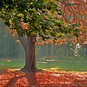 Дървото... by Dobrinka Ivanova - Uncategorized All Uncategorized ( дърво, есен )
