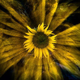 Sunflower Splash by Craig Turner - Digital Art Abstract ( flowers, zoom, abstract, sunflower, ca )