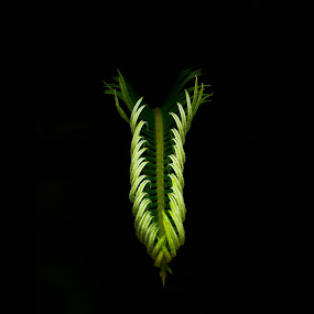 Glowing green.. by Rana Ghosh - Nature Up Close Leaves & Grasses ( green, leaves )