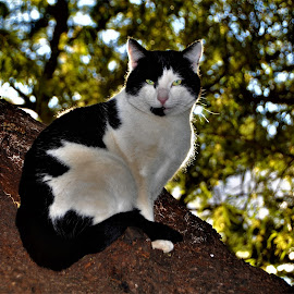 by Orpa Wessels - Animals - Cats Portraits (  )
