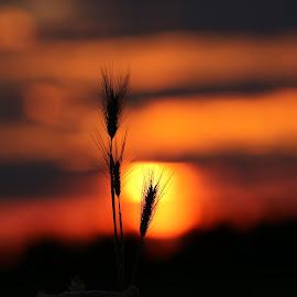 by Sandy Lindberg - Landscapes Sunsets & Sunrises (  )