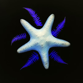 Star by CLINT HUDSON - Digital Art Things ( fern, blue, star )