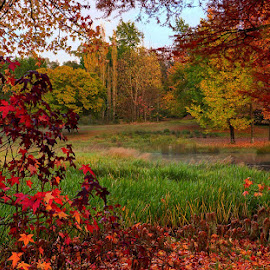 Fall at the Waters Edge by Robbie Aspeling - Landscapes Prairies, Meadows & Fields ( red, senery, autumn, fall, trees, colours )