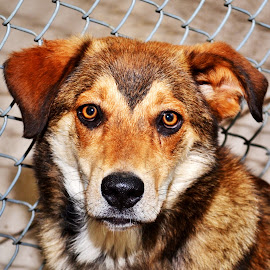 by Michael Cowan - Animals - Dogs Portraits ( shelter, adopt, dog,  )