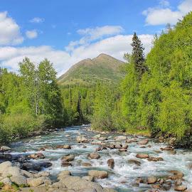 Little Susitna River by Patricia Phillips - Landscapes Travel ( alaska rivers susitna summer )