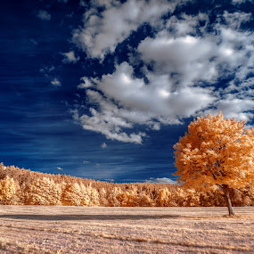 Tree & Cloud by Thorsten Scheel - Landscapes Cloud Formations ( ir, blue sky, tree, infrared, infrarot, cloud )