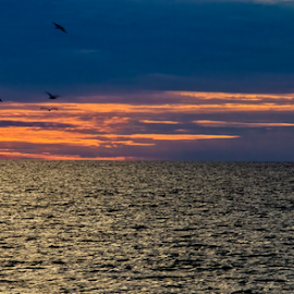 Naples Pier by Kenneth Anderson - Landscapes Sunsets & Sunrises ( naples photowalk 2013, phtowalk )