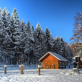 Hut by Matej Skubic - Landscapes Weather ( sky, hut, snow, trees, weather, forest )