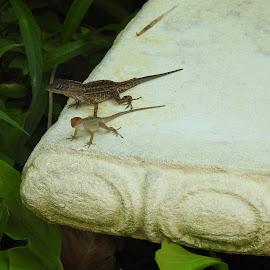by Rhonda Rossi - Animals Reptiles