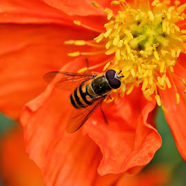 Sunday morning by Heather Aplin - Animals Insects & Spiders