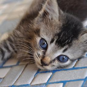 by Nazeri Mamat - Animals - Cats Kittens