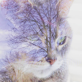 Nature's In Me by Lisa Newberry - Digital Art Animals ( fence, cat, sky, tree, digital art, eye )