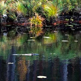Moose Lake reflections by Alf Winnaess - Nature Up Close Water