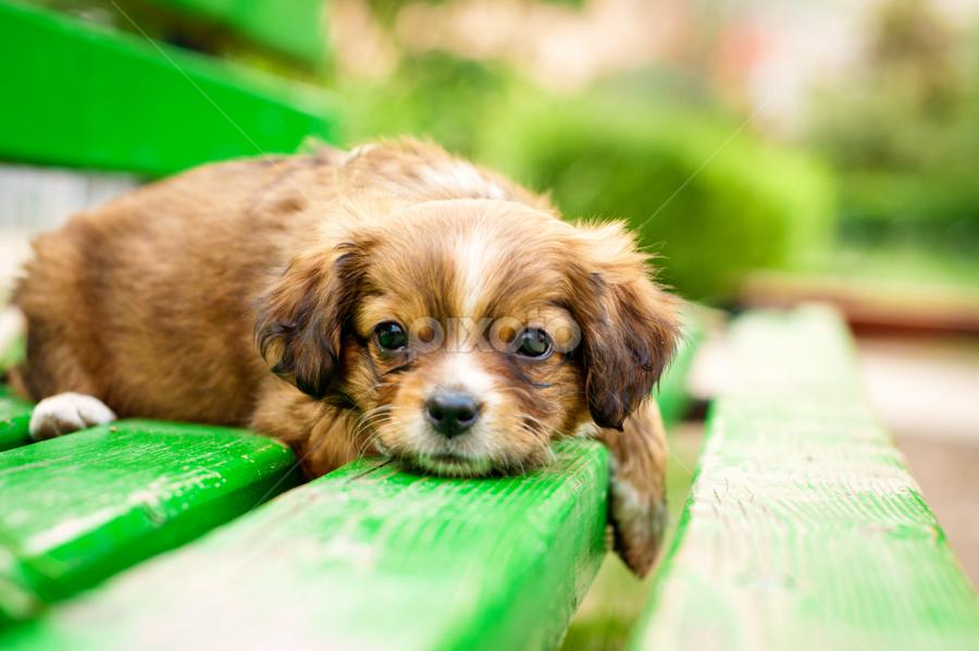 by Ovidiu Caba - Animals - Dogs Portraits