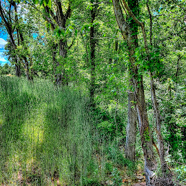 by Derrill Grabenstein - Landscapes Forests (  )