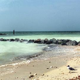 Honeymoon Island Beach by Charles Pfohl - Instagram & Mobile iPhone ( #lovefl, #travelfl, #beach, seascape )