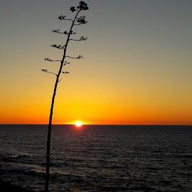La Jolla Sunset by Melissa Papaj - Instagram & Mobile Android ( sky, tree, california, sunsets, sunset, ocean, coast )