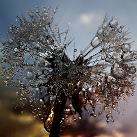 Dandelion's Winter Dream by Marija Jilek - Nature Up Close Other plants