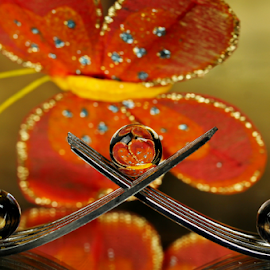 by Dipali S - Artistic Objects Other Objects ( abstract, butterfly, fork, reflection, color, colorful, still life, art, artistic, spoon, spheres, refraction )