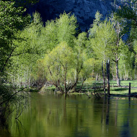 River Reflection by Karen Coston - Novices Only Flowers & Plants ( reflection, riverside, yosemite, treescape, spring )