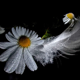 *** by Jurijs Ratanins - Instagram & Mobile Android ( mobilography, nature, daisies, plants, flowers, feather )
