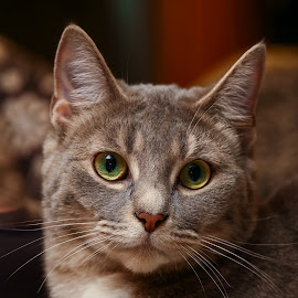 by Andrew Lawlor - Animals - Cats Portraits