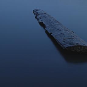 Driftwood by David Vanveen - Backgrounds Nature