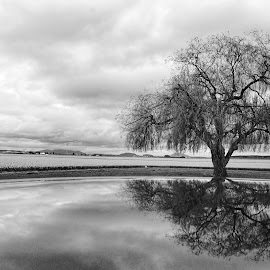 Reflecting  by Todd Reynolds - Black & White Flowers & Plants
